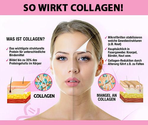 collagen_main